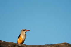 CM Travels: King Fisher | Bird Photography Photography