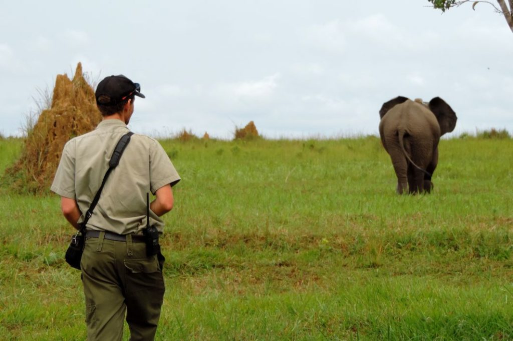 CM Travels: Travel Deeper | Safari | Nature | Wildlife | Photography