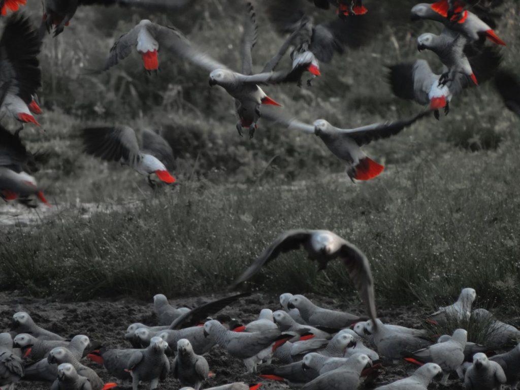 CM Travels: Odzala | Congo | Wildlife | Rain Forest | Nature | Adam Parker