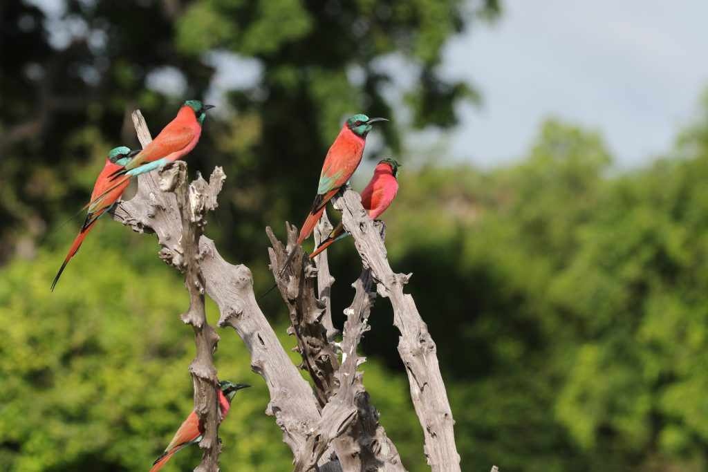 CM Travels: Deeper Travel | Africa | Bee Eater | Selous
