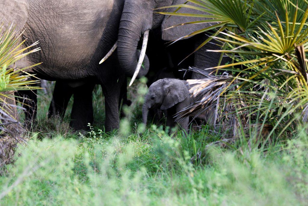 CM Travels: Selous National Park | Elephant | Safari | Wildlife | Nature