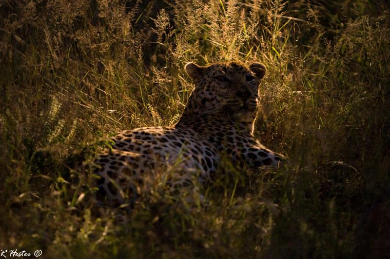 CM Travels: The Best of The Sabi Sands | Wildlife | Nature | Africa | Leopard |. Safari
