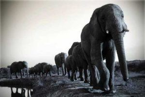 Camp-Jabulani-Elephant-Herd-safari-south-afrcia-big5