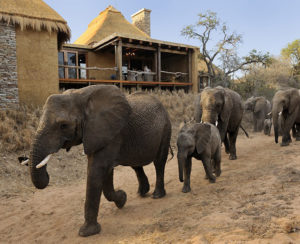 Camp-Jabulani-Elephants-in-front-of-camp