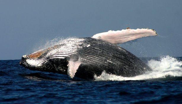 CM Travels | Cape Town | Whale Watching tour