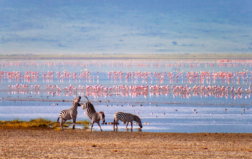 CM Travels | Tanzania | Family Safari | Zebras and flamingos in the Ngorongoro Crater