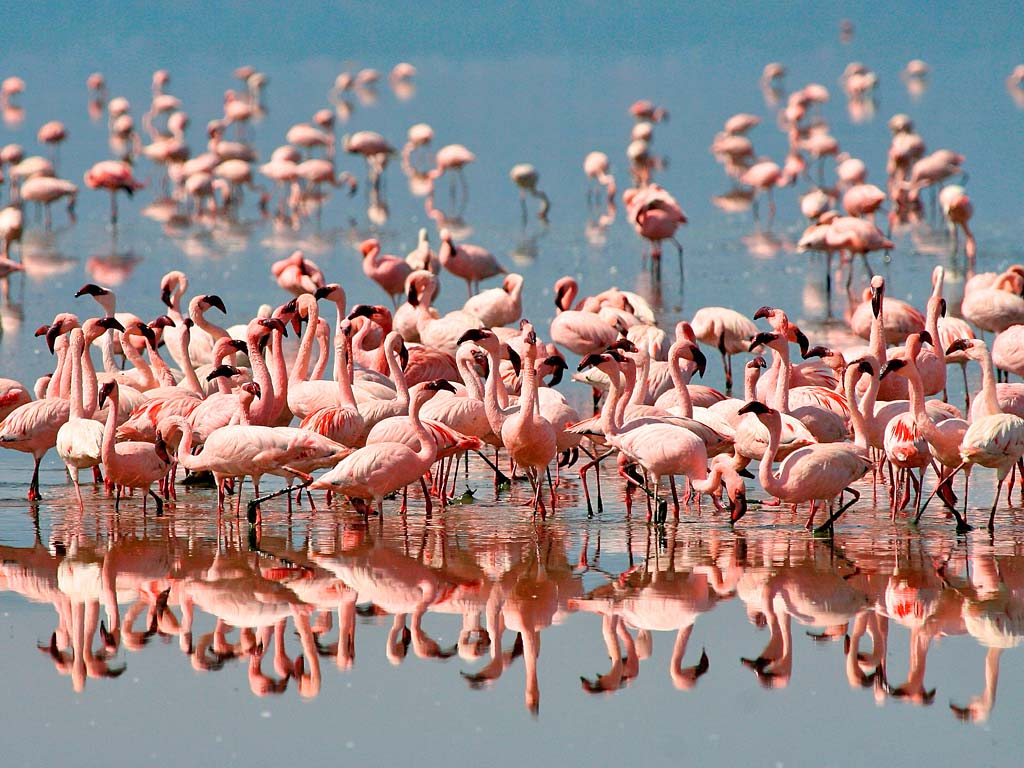 Safari Familienreisen – Flamingos