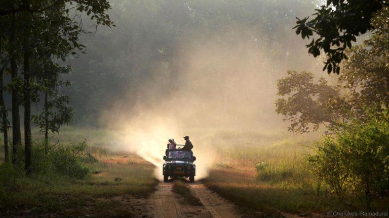 Indiensafari – Jeep