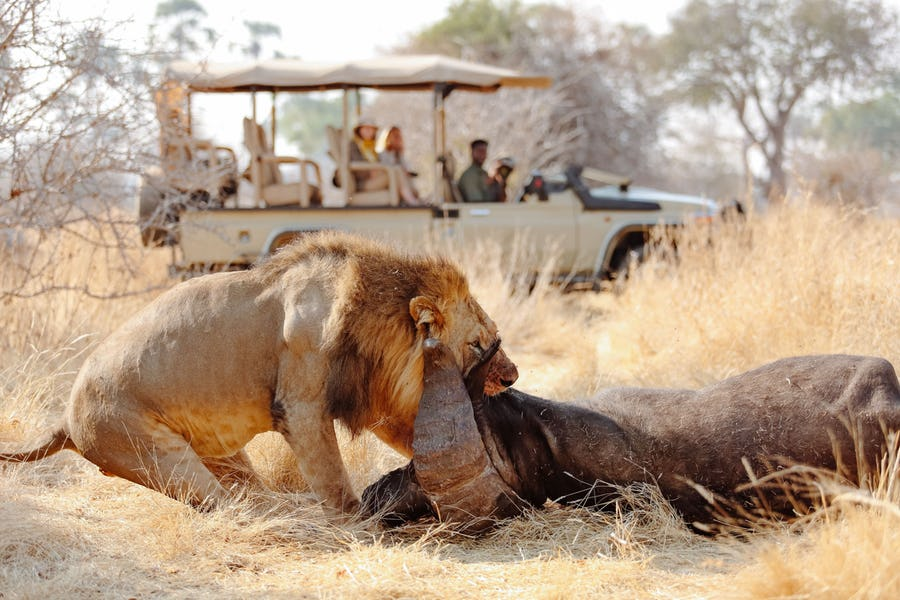 CM-Travels-ruaha-ikuka-safari-lodge-tanzania1