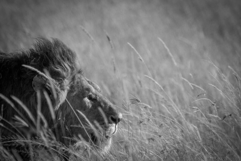 CM-Travels-ruaha-ikuka-safari-lodge-tanzania3