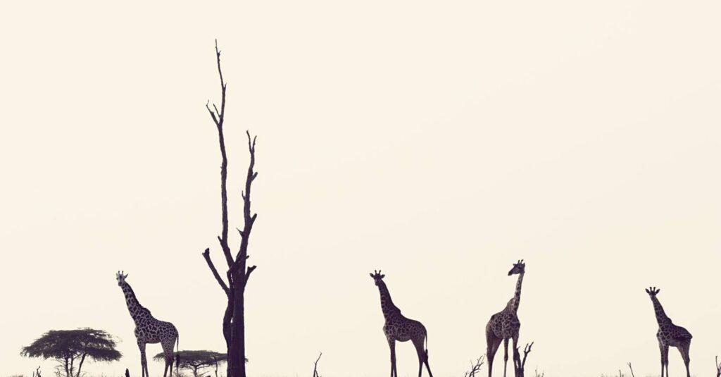 CM-Travels-beho-beho-tanzania-selous-camp-OutofSight13_CNT_11mar13_pr_b