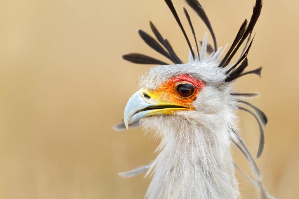 CM-Travels-beho-beho-tanzania-selous-camp-secretary-bird