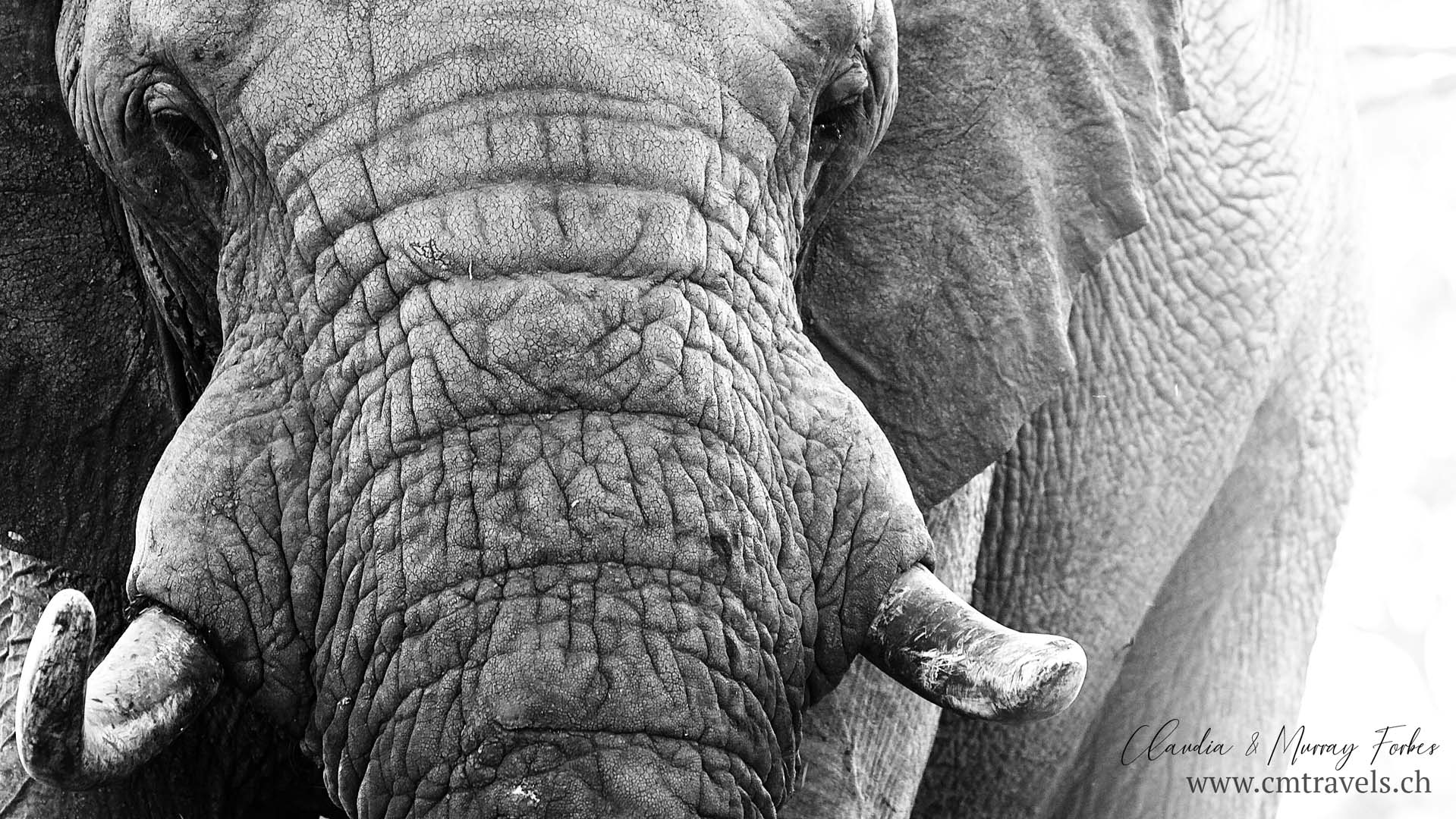 africa-elephant-wildlife-travel