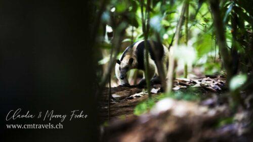 brazil-monkey-cmtravels-wildlife