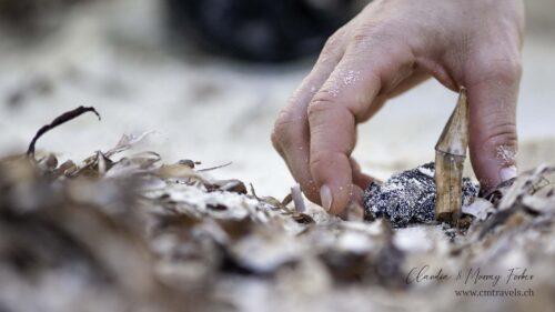 seychelles-tortoise-cmtravels-wildlife