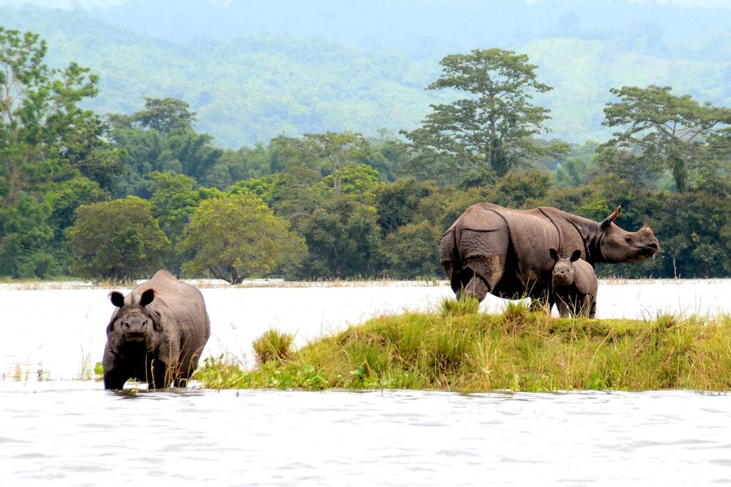 Indian-Rhinos-in-Kazaringa-National-Park-India-nature-wildlife-travel