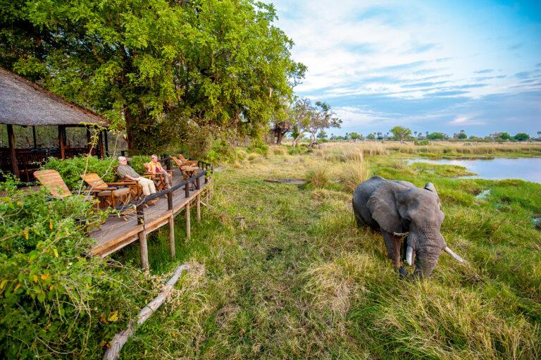 Safari Familienreisen – Delta Camp