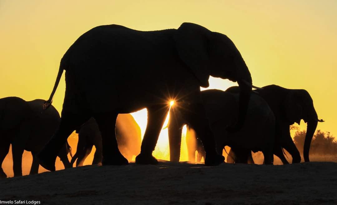 Safari Familienreisen – Elefanten im Sonnenaufgang