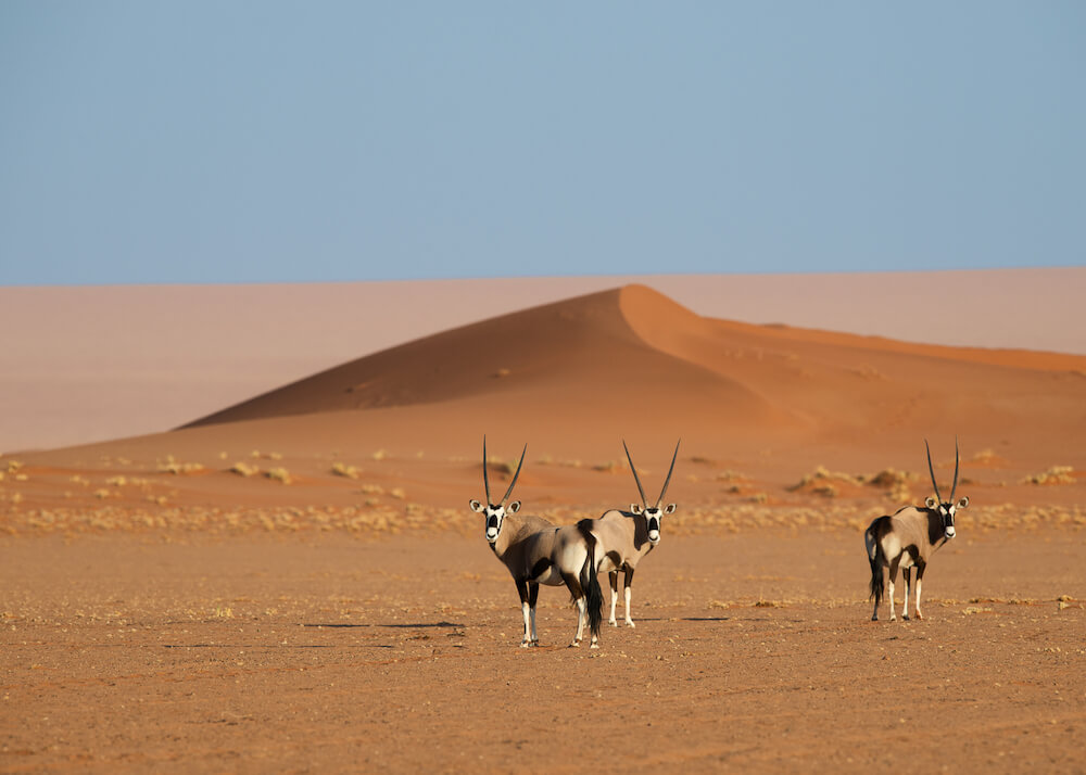 wildlife-oryx-natural-selection-camps-nature-cm-travels
