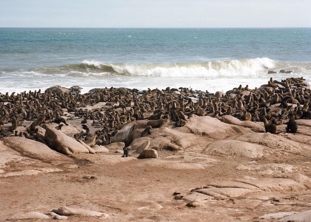 fur-seal-colony-skeleton-coast-outside-view-natural-selection-camps-nature-cm-travels
