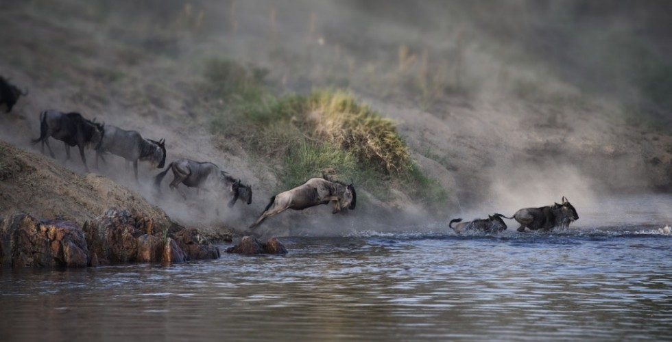 cm-travels-tanzania-wildlife-nature-serian-serengeti-camp-wildebeest-migration