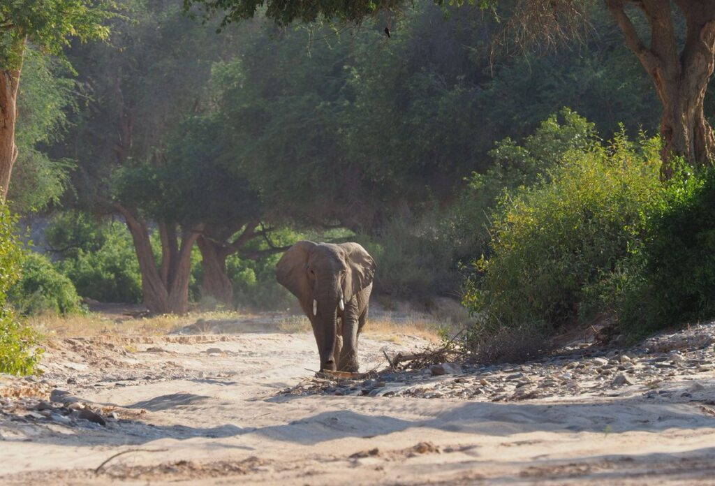 elephant-wilderness-safari-hoanib-river-nature-cm-travels