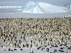 cm-travels-antartica-wildlife-nature-white-desert-camp-emperor-penguins-ulitmate-luxury-private-colony-aerial