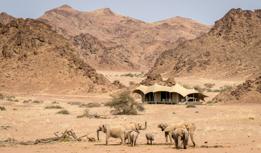 desert-adapted-elephants-wilderness-safari-hoanib-river-nature-cm-travels