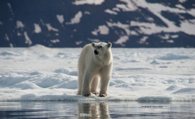 cm-travels-artic-wildlife-nature-polar-bear-ulitmate-luxury-svarlbard-polar-bear-eye-level-picture