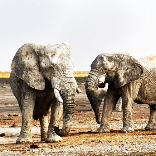 CM Travels | Namibia | Elephants
