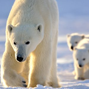 CM Travels | Canada | Polar Bear Lodge_ by Michelle Valberg _MV83873